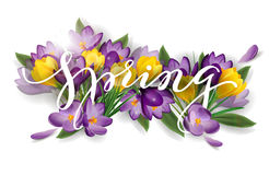 Word spring with flowers crocuses. Spring background concept. Vector Royalty Free Stock Photography