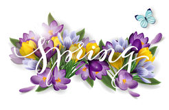 Word spring with flowers crocuses. Spring background concept. Vector Stock Photography
