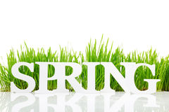 Word Spring with fresh grass Stock Photo