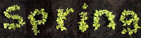 Word spring with lettuce Stock Image