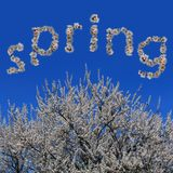 Word spring made of flowers and flowering apricot tree Stock Photo