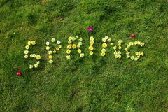 The word spring spelt out in flowers. SPRING is spelt out in primroses against a background of green grass. The flowers are mainly various shades of yellow with Royalty Free Stock Photography