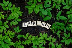 Word spring from wooden letters on the ground amidst green vegetation. Word spring from small wooden letters on the ground among green vegetation in nature Royalty Free Stock Photos