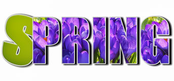 The word `Spring`. Written on a white  background make of violet flowers texture Stock Image