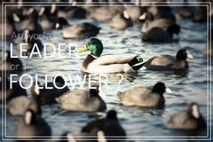 Word suiviste Bain sauvage de canards de Mallard dans le lac Image libre de droits