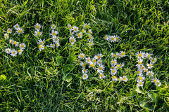 Word summer on grass by camomiles. The word summer is lined with flowers camomiles on grass royalty free stock photo
