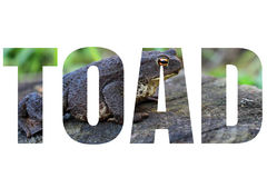 Word TOAD Stock Image