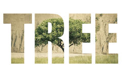 Word TREE over the hilly landscape with a lone tree in the Fan M Stock Photos