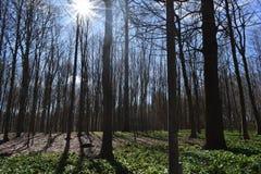 Word verloren in het bos royalty-vrije stock fotografie