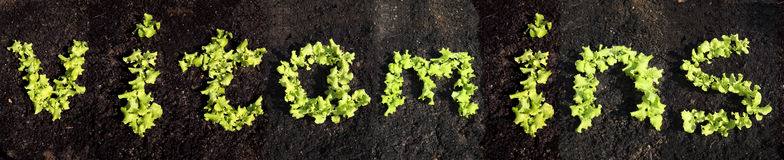 Word vitamins with lettuce Stock Image