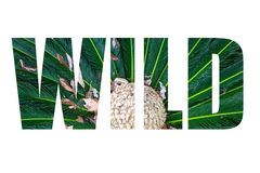 Word WILD over Leaves of palm tree top view similar to peacock f Stock Images