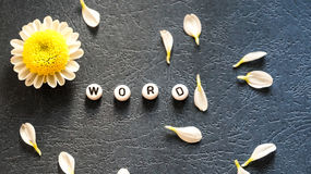 The word `Word` laid out of round blocks, scattered petals and chamomile 1. Photo Royalty Free Stock Image