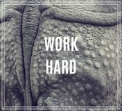 Word Work Hard. Closeup of the strong armor of a rhinoceros. Royalty Free Stock Images