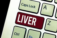 Word writing text Liver. Business concept for Large lobed glandular organ in the abdomen of vertebrates Produce bile.  stock images
