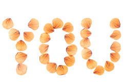 Word YOU arranged from dry real rose petals. Word YOU arranged from dry real rose petals and isolated on white royalty free stock photography