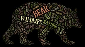 Wordcloud of bear Stock Image