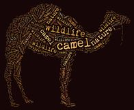 Wordcloud of camel Stock Photography