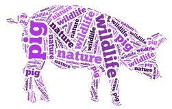 Wordcloud des Schweins Stockfotos
