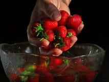 Worden de vers gewassen aardbeien gehouden over een kom op donkere achtergrond in hand royalty-vrije stock foto's