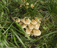 Worden park fungi Royalty Free Stock Images