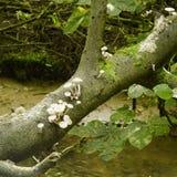 Worden park fungi Stock Image