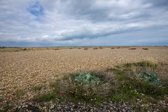 The world`s greatest area of shingle - Dungeness, Kent, England. The area of Dungeness in Kent is the largest area of shingle in the world stock photo