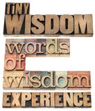 Words of wisdom. Tiny wisdom, words of wisdom and experience - collage of isolated text in vintage letterpress wood type printing blocks royalty free stock photo