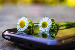 The words you need. Wild butter-weed lying on a screen of an  android smartphone Stock Photography