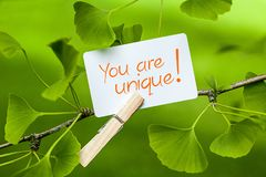 You are unique!. The words You are unique! in a Ginkgo Tree Royalty Free Stock Photography