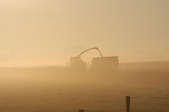 At work. In morning fog Stock Image