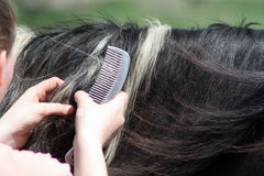 Work. A woman cleaning the mane of a horse Stock Photography