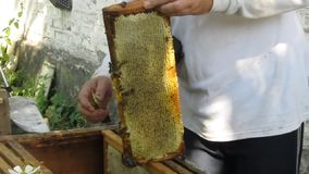 Work in the apiary beekeeper stock video