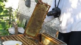Work in the apiary beekeeper stock video footage