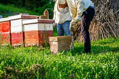 Work in apiary. Two beekeepers are on spring checking of all details in their apiary royalty free stock images