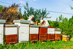 Work in apiary Stock Photos