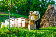 Work in apiary. Two beekeepers are on spring checking of all details in their apiary stock image