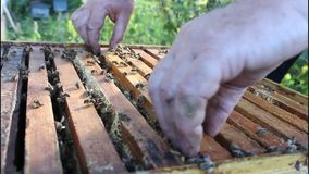 Work of beekeeper with bees stock video footage