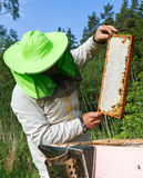 Work of beekeeper outside. Stock Photo