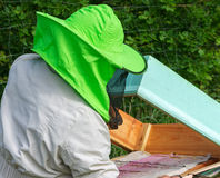 Work of beekeeper. Stock Photos