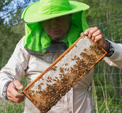 Work of beekeeper outside. Stock Images