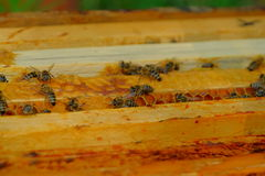 Work bees in hive. Bees in a beehive on honeycomb stock image