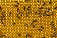 Work of bees inside hive. They convert nectar into honey. Each bee does some work. Now bees take nectar from honeycombs to transform it into honey royalty free stock photos