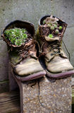 Work boots and cactus Royalty Free Stock Photos