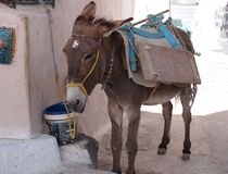 Donkey tied to building with bright colored equipment stock image