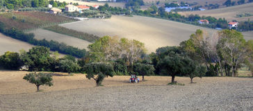 Work in the fields. A tractor to small for the fields in where it works - Italian country - Senigallia (AN Stock Photos