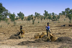 Work in the fields - Mali Royalty Free Stock Images