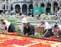 Work on the Flower Carpet on Grand Place Royalty Free Stock Images