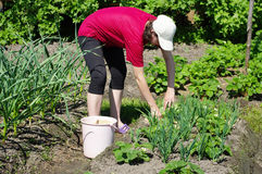 Work in the garden Stock Images