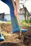 Work in a garden - Digging Spring Soil With Spading fork. Close up of digging spring soil with blue shovel preparing it for new sowing season royalty free stock photos