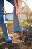 Work in a garden - Digging Spring Soil With Spading fork. Close up of digging spring soil with blue shovel preparing it for new sowing season royalty free stock images